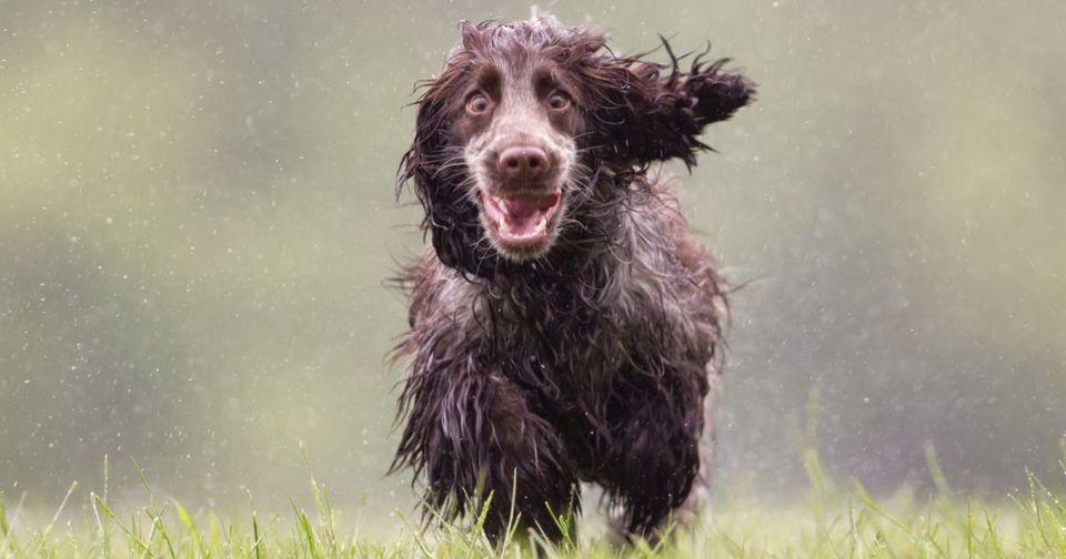 Afecțiunile articulare la câini – Sfaturile Veterinarului