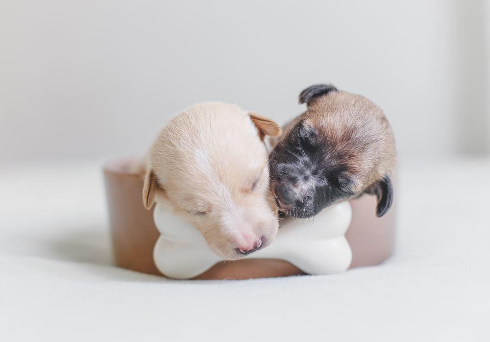 Cățeluși dormind