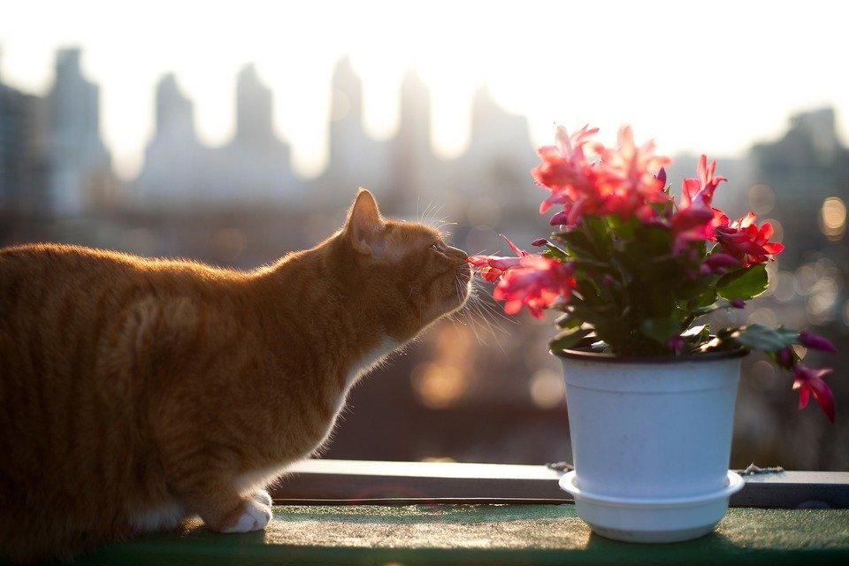 Viermii la pisici – simptome, cauze. Când și cum deparazităm pisica?