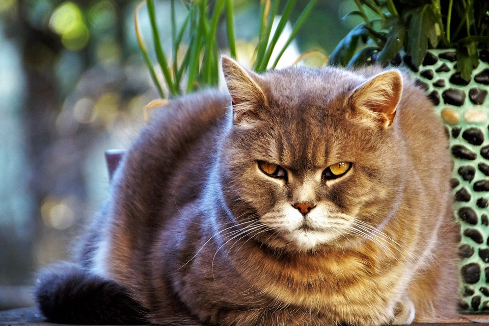 Diareea la pisici – cauze frecvente și tratament