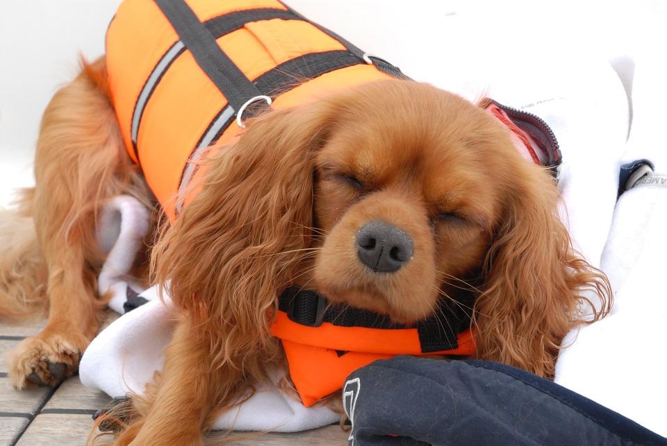 Câinele în avion – ce trebuie să ținem minte?