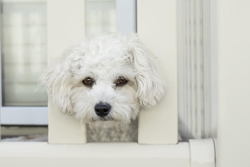 Diareea la câine – cele mai frecvente cauze și tratament
