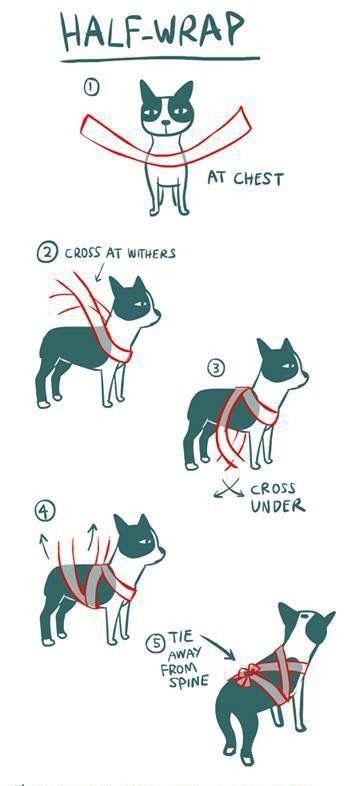 Owijanie psa bandażem ma działanie uspokajające dzięki uciskaniu odpowiednich nerwów. Należy to jednak robić świadomie i umieć to, ponieważ złe opatulenie wprowadzi więcej złego niż dobrego.