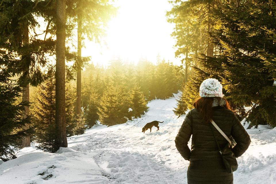 Plimbările de iarnă cu câinele – ce trebuie să ținem minte?