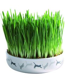 TRIXIE Bol Ceramic 15 x 4 cm iarba mâței pentru pisici