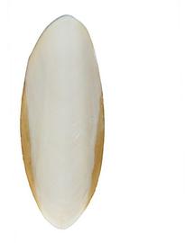 TRIXIE Os de sepie pentru țestoase 12 cm