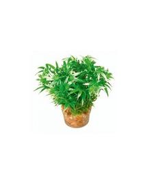 ZOLUX Plantă mică cu suport nr 1