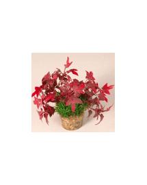 ZOLUX Plantă mică cu suport nr 3