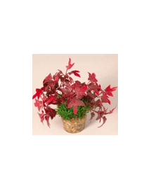 ZOLUX Plantă medie cu suport nr 3