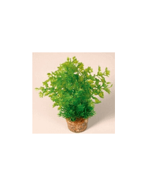 ZOLUX Plantă medie cu suport nr 2