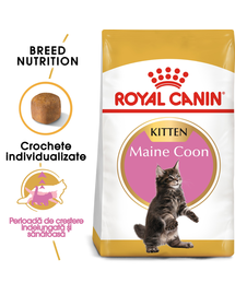 ROYAL CANIN kitten maine coon 10 kg