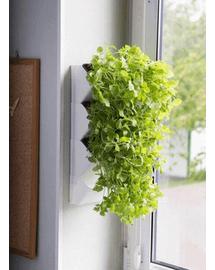 AQUAEL Modul perete Versa Garden Herbs