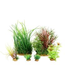 ZOLUX Plantă decorativă Plantkit Jalaya model 4