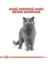 Royal Canin British Shorthair Adult Hrană Uscată Pisică 10 kg