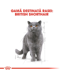 Royal Canin British Shorthair Adult hrana umeda pisica, 12 x 85 g