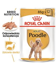 ROYAL CANIN Poodle Adult Hrană umedă 85 g