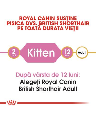 Royal Canin British Shorthair Kitten hrana uscata pisica junior, 10 kg