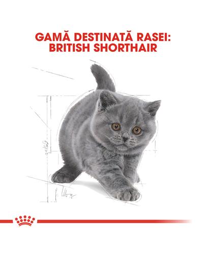 Royal Canin British Shorthair Kitten Hrană Uscată Pisică 10 kg