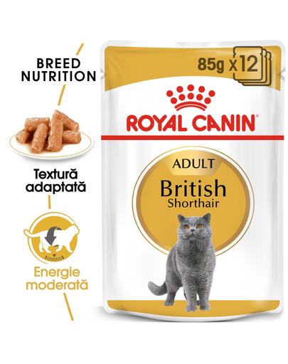 Royal Canin British Shorthair Hrană Umedă Pisică 85 g