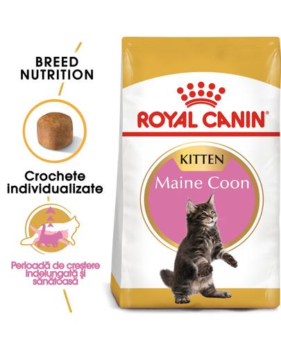 ROYAL CANIN Maine Coon Kitten hrană uscată pentru pisoi Maine Coon până la vârsta de 15 luni 20 kg (2 x 10 kg) imagine