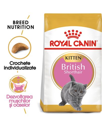 ROYAL CANIN Kitten British Shorthair 20 kg (2 x 10 kg) hrană uscată pentru pisoi British Shorthair de până la 12 luni imagine