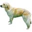 TRIXIE Chiloți pentru câini 2 bej