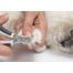 CATIT Set îngrijire pentru pisici cu blana lungă