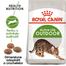 Royal Canin Outdoor Hrană Uscată Pisică 4 kg